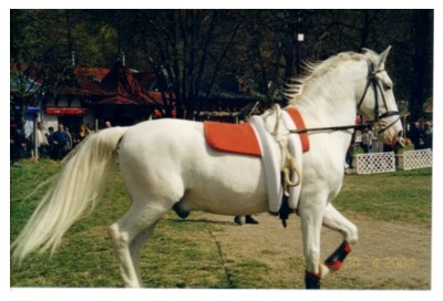 Lipica Horse-the main price for the BIS-winner of both CACIB-shows