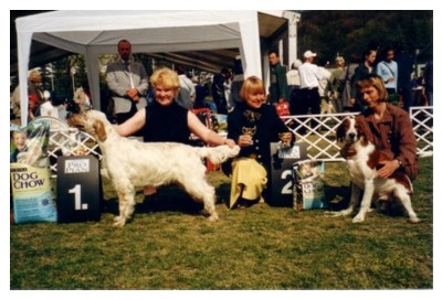Pertti - at the Clubshow winning BIS-1 puppy